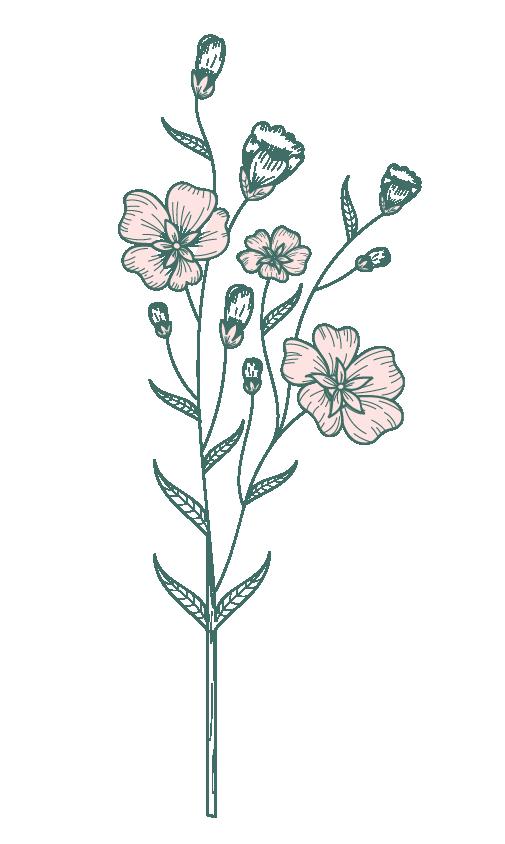 dessin-fleur-fleurs